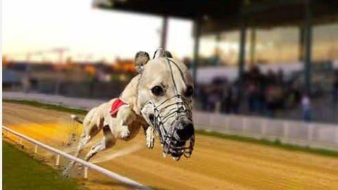 Paddy Power Greyhound Racing MBS